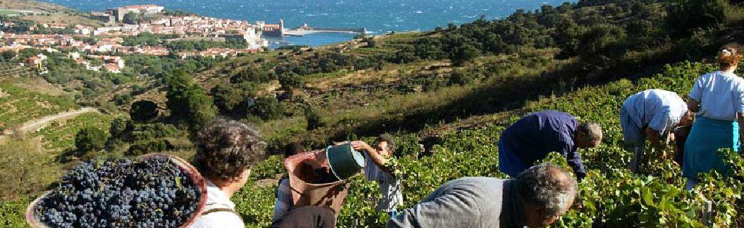 https://www.sud66.com/wijnbouw.jpg