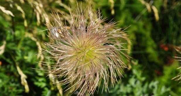 Les Fleurs des Pyrénées 2