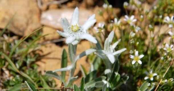 Les Fleurs des Pyrénées 5