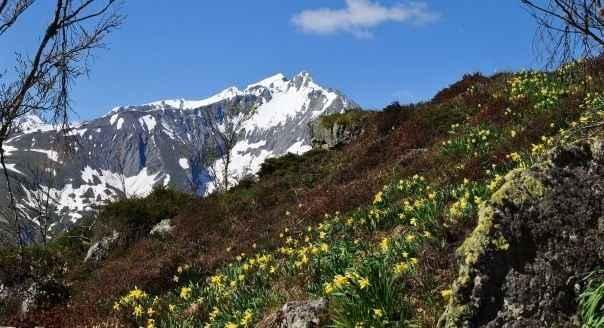 Les Fleurs des Pyrénées 7