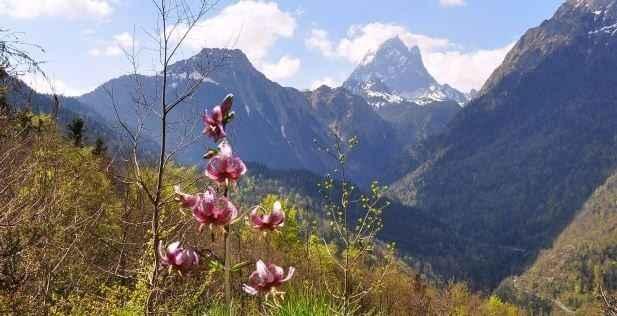 Les Fleurs des Pyrénées 10